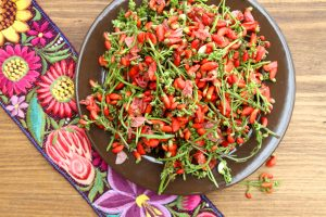 Flor de botil – Scarlet Runner Bean