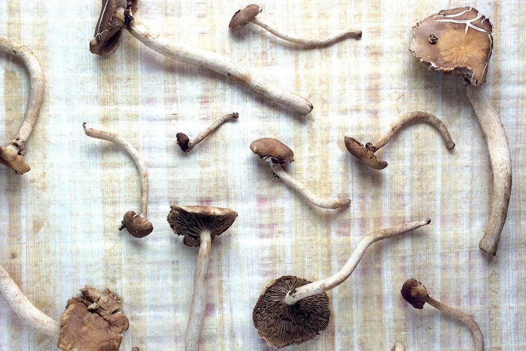 Pioppinno Mushrooms